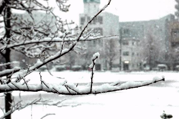 和歌山市にも雪が!_b0093754_23412827.jpg