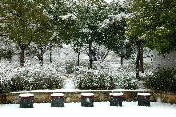 和歌山市にも雪が!_b0093754_2341954.jpg