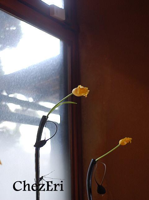 春を待つ_a0160955_1027575.jpg