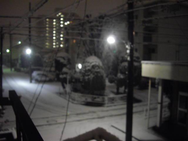 3年ぶりの雪の朝_d0116059_21331246.jpg