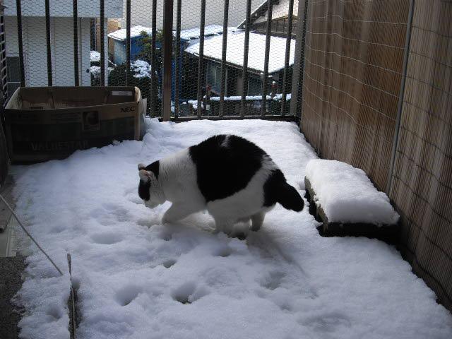3年ぶりの雪の朝_d0116059_21353587.jpg