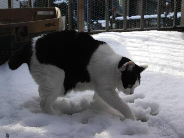 3年ぶりの雪の朝_d0116059_21395144.jpg