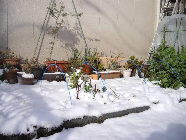 3年ぶりの雪の朝_d0116059_2145886.jpg