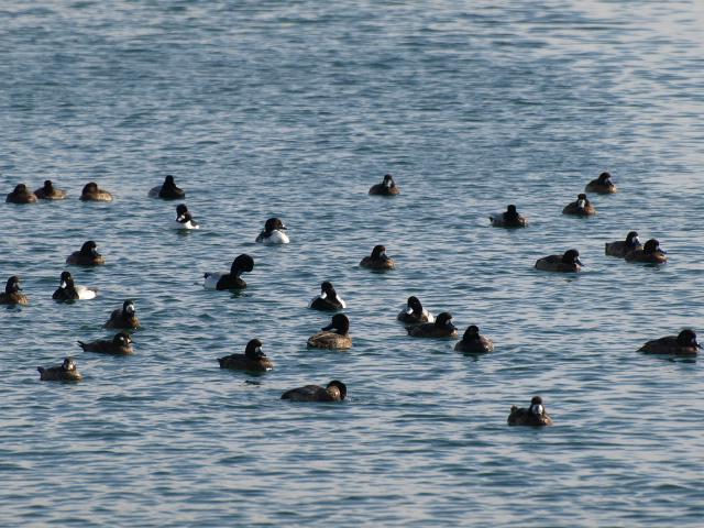 苫小牧漁港 冬_d0153062_961413.jpg