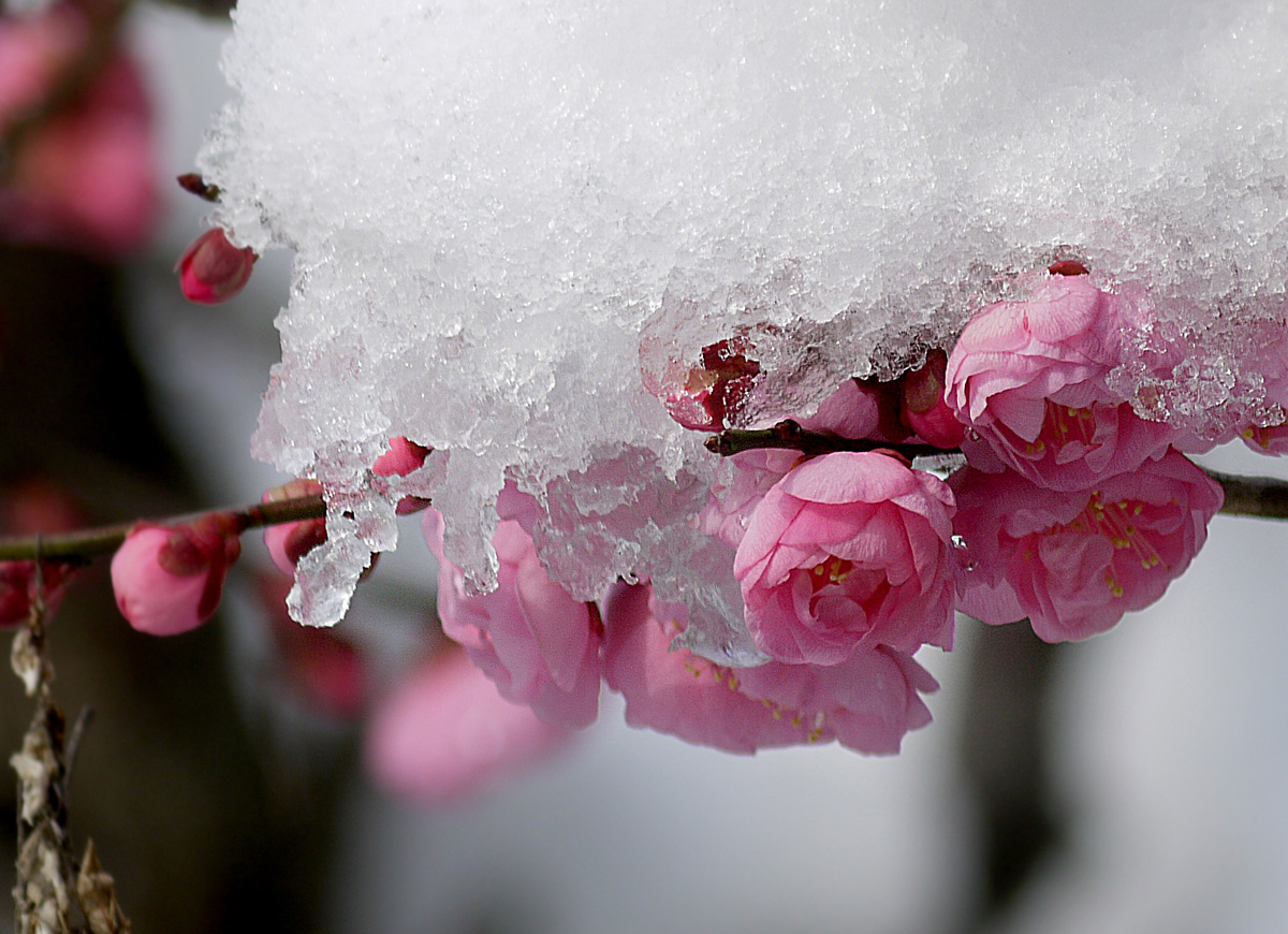 錦織公園の雪解け模様のトラちゃん!_f0215767_17591764.jpg