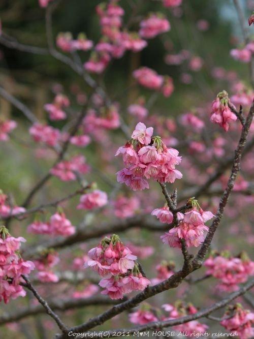 春巻き弁当♪_c0139375_10563388.jpg