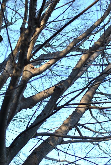 ある冬の日_b0194880_19165245.jpg