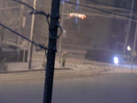 突然の大雪!_e0119092_9254873.jpg