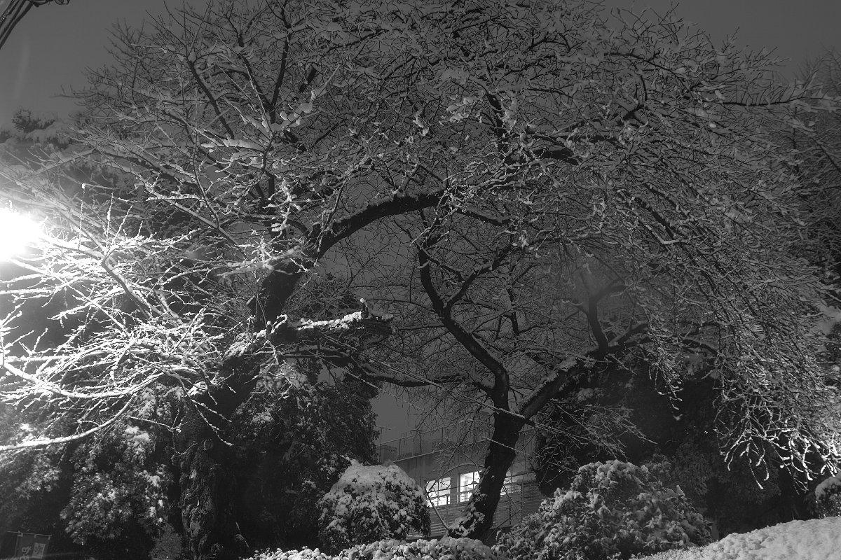 東京は雪なのだ_c0124795_055533.jpg