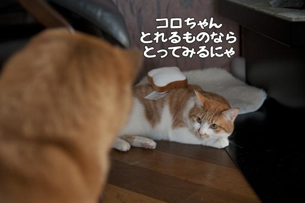 b0141397_9525294.jpg