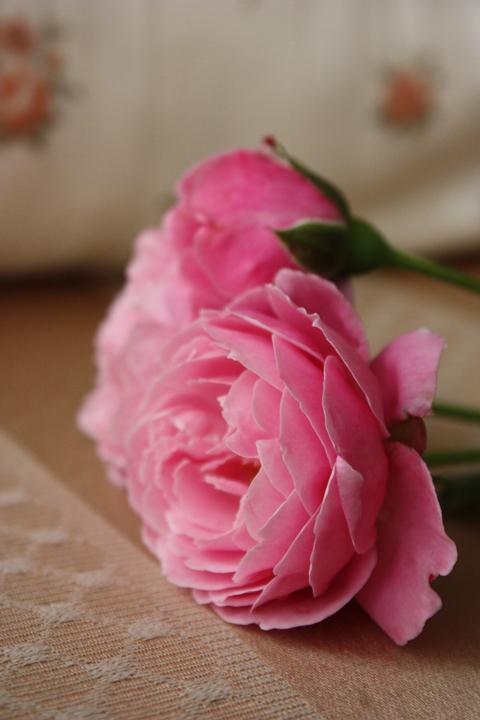 バラの咲く時期まで・・・_f0181000_857251.jpg