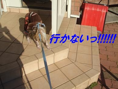 f0179203_17145516.jpg