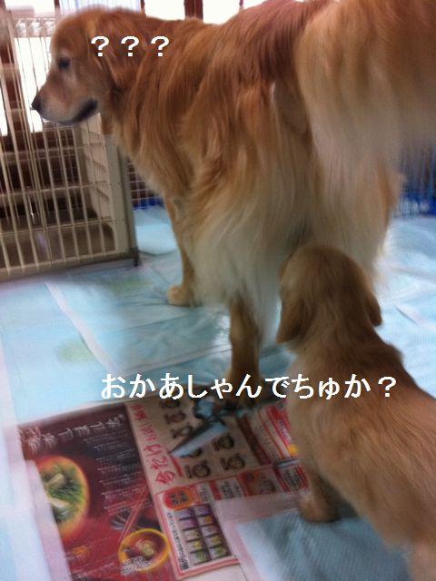 b0127531_0522910.jpg