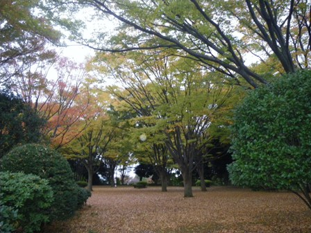 2010 Satogaeri Japan memorys~_a0138438_0524966.jpg
