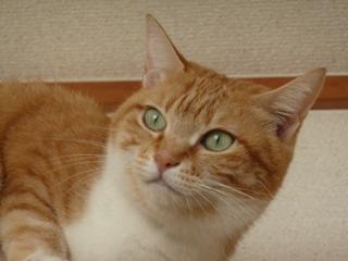 猫のお友だち ちぃちゃんあずきちゃんちょびくんまろくん編。_a0143140_23173541.jpg