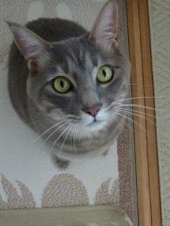 猫のお友だち ちぃちゃんあずきちゃんちょびくんまろくん編。_a0143140_23184179.jpg