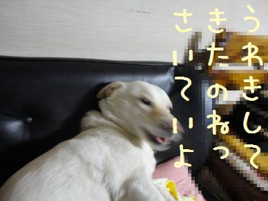 f0195543_22121979.jpg