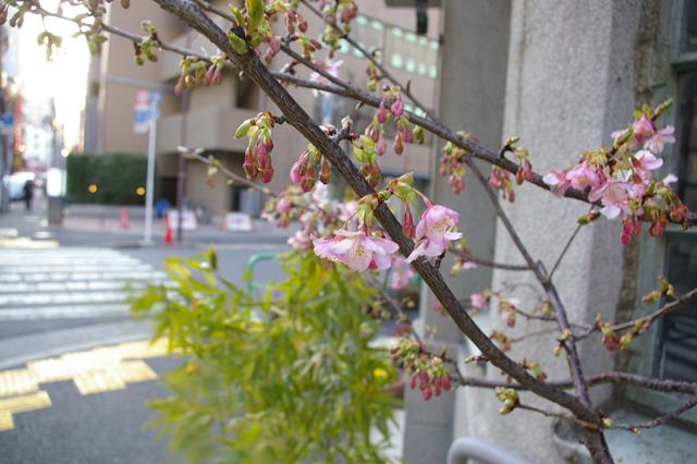 春遠からじ...: the start of spring in solar term_a0186568_228263.jpg