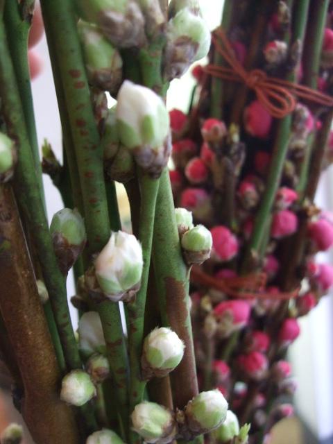 オークリーフ(そろそろ、桃の花)_f0049672_14582297.jpg