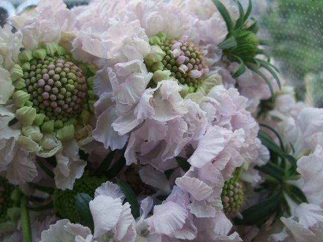 オークリーフ(そろそろ、桃の花)_f0049672_15373499.jpg