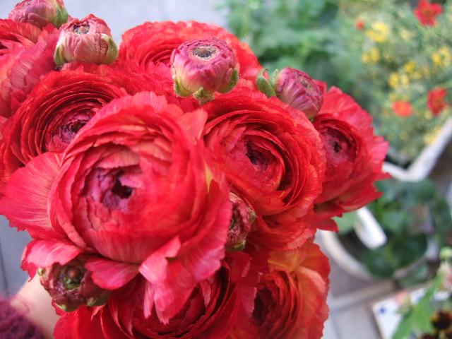 オークリーフ(そろそろ、桃の花)_f0049672_15382584.jpg