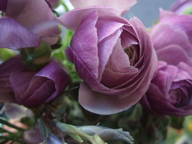 オークリーフ(そろそろ、桃の花)_f0049672_1538447.jpg