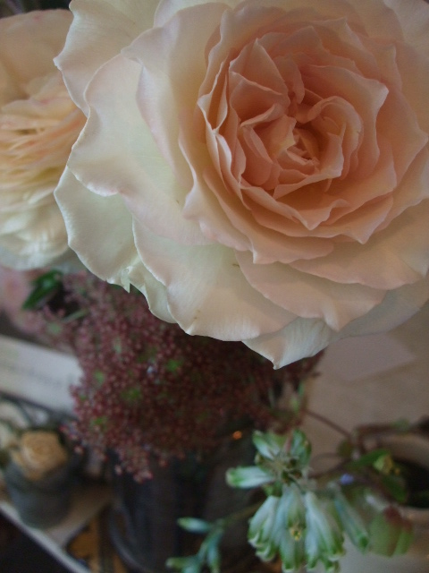 オークリーフ(そろそろ、桃の花)_f0049672_1541332.jpg