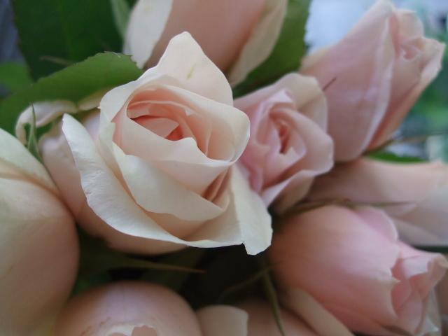 オークリーフ(そろそろ、桃の花)_f0049672_1565071.jpg