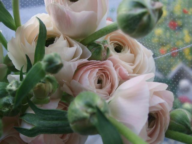 オークリーフ(そろそろ、桃の花)_f0049672_1571226.jpg