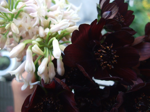 オークリーフ(そろそろ、桃の花)_f0049672_15747100.jpg