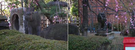 寺院と狛犬その10・改修中の天現寺の狛犬は_d0183174_19233567.jpg