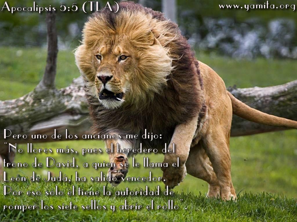 2月16日民数記22‐24章『祝福する者たちを祝福し続ける主』_d0155777_9225284.jpg