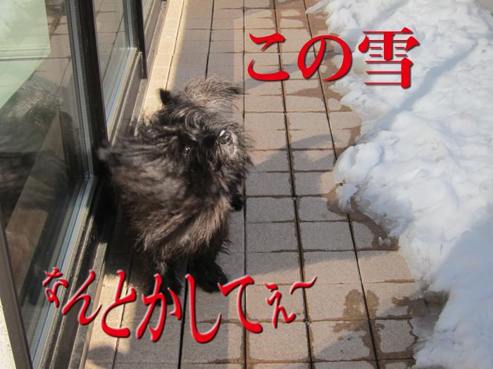 e0176691_20125266.jpg