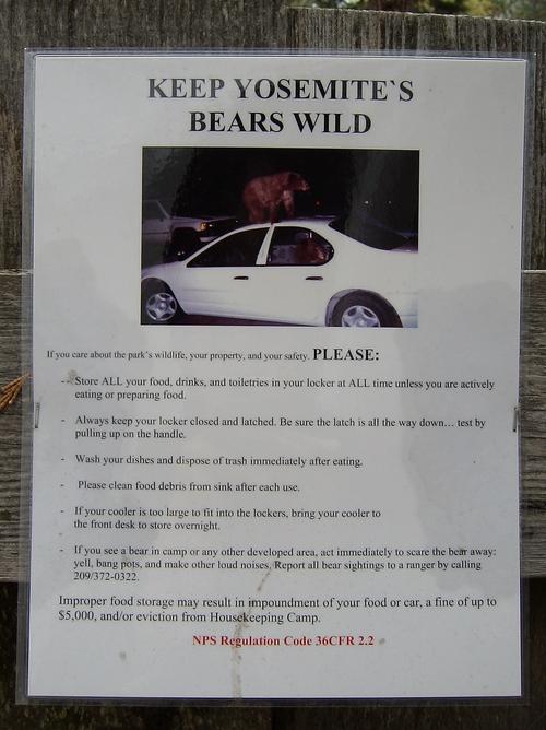 吾輩はシャーロック・ホームズである と「贋作『坊ちゃん』殺人事件」 と 熊の追加_a0194908_1804993.jpg