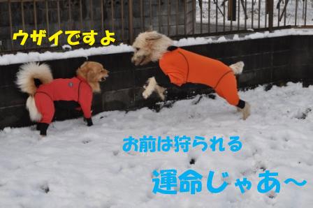f0176830_1602531.jpg