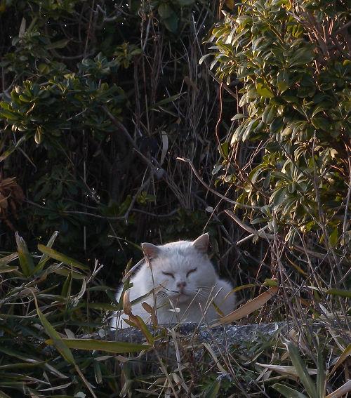 葛西臨海公園で見た猫2_e0089232_20281158.jpg