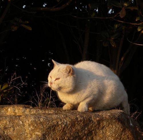 葛西臨海公園で見た猫2_e0089232_2028268.jpg