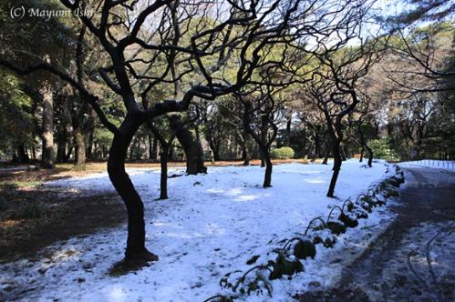 雪の翌日_a0086851_337353.jpg