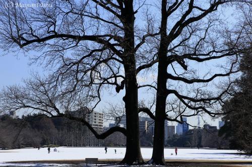 雪の翌日_a0086851_3411816.jpg