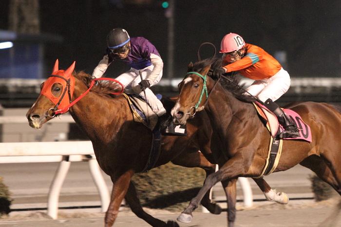 2011年2月5日(土) 高知競馬 6R チーム北海道協賛 がんばれ修次特別 C2ロ_a0077663_6555292.jpg