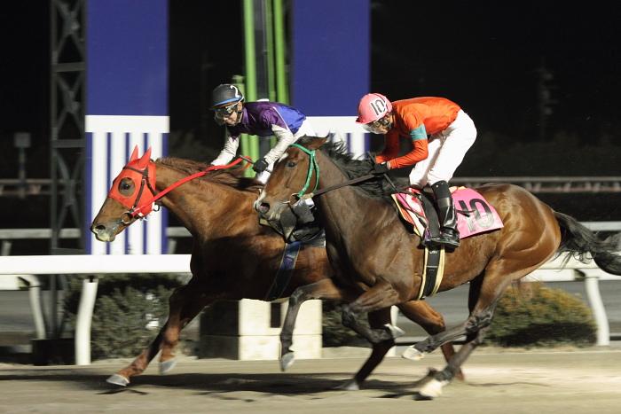2011年2月5日(土) 高知競馬 6R チーム北海道協賛 がんばれ修次特別 C2ロ_a0077663_7225566.jpg