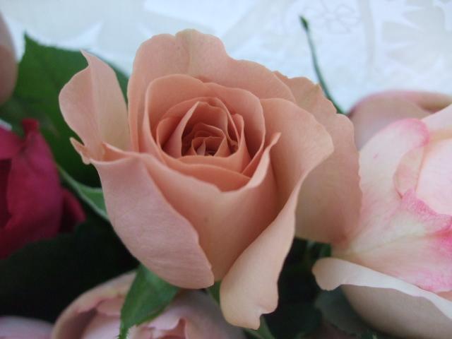 オークリーフ(35本の薔薇の花束)_f0049672_13504269.jpg