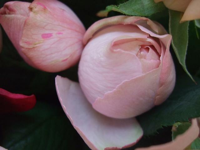 オークリーフ(35本の薔薇の花束)_f0049672_13531154.jpg
