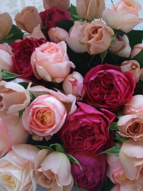 オークリーフ(35本の薔薇の花束)_f0049672_1401081.jpg