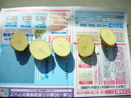 ジャガイモの種いも植え付け_e0231387_17122039.jpg