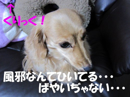 sh-05c シリコンケース_b0200291_18321683.jpg