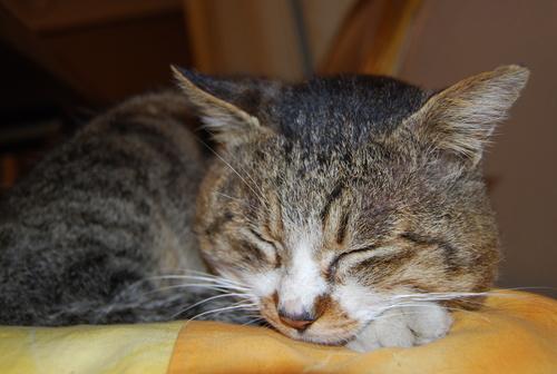 虎太郎の 長生き祝って 鰹節_f0101201_200387.jpg