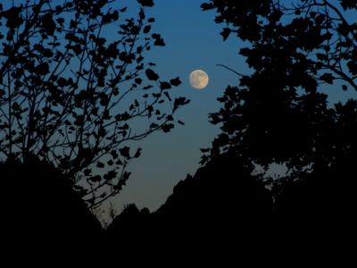 満月です_c0173405_19491039.jpg