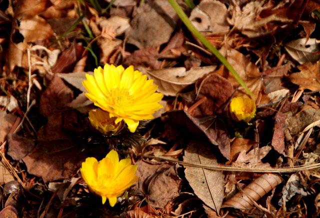 植物園 早春の花_e0048413_18254672.jpg