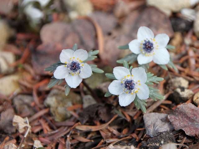 植物園 早春の花_e0048413_1826765.jpg